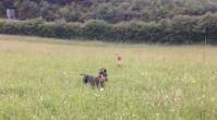 en uygun köpek pansiyonları - kopekpansiyonu.org