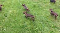 en uygun köpek pansiyonu - kopekpansiyonu.org