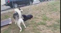 En iyi köpek pansiyonu