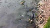 Kayalıklara sıkışan yavru yunusu böyle kurtardılar