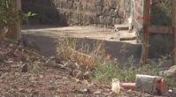 Alev alan piknik tüpü sokağa atıldı