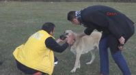 Yangın sonrası sır olan ailenin köpeklerine HAYTAP sahip çıktı