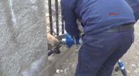 Korkuluğa sıkışan köpeği itfaiye kurtardı