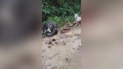 Dev pitonun yemek üzere olduğu köpeği kurtardılar