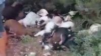 Telef olan keçilerine sarılarak ağladı (2) - MANİSA