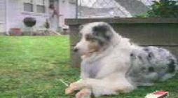 animal dog sexs ile ilgili Mynet Video Arama Sonuçları